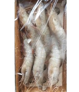 渤海湾野生对虾